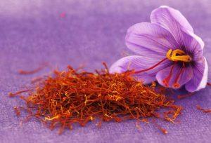 تاريخ نبات الزعفران